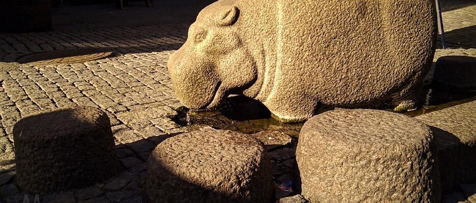 Hippo puppy Frederikke © AArhusPilot.com | Kirsten K. Kester