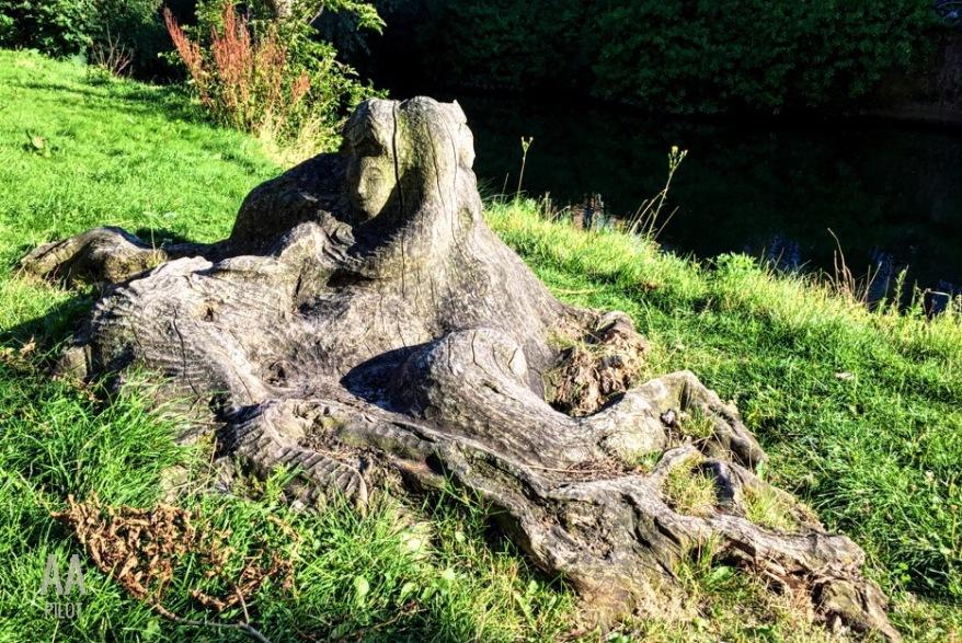 The woman in the tree | AArhusPilot.com by Kirsten K. Kester