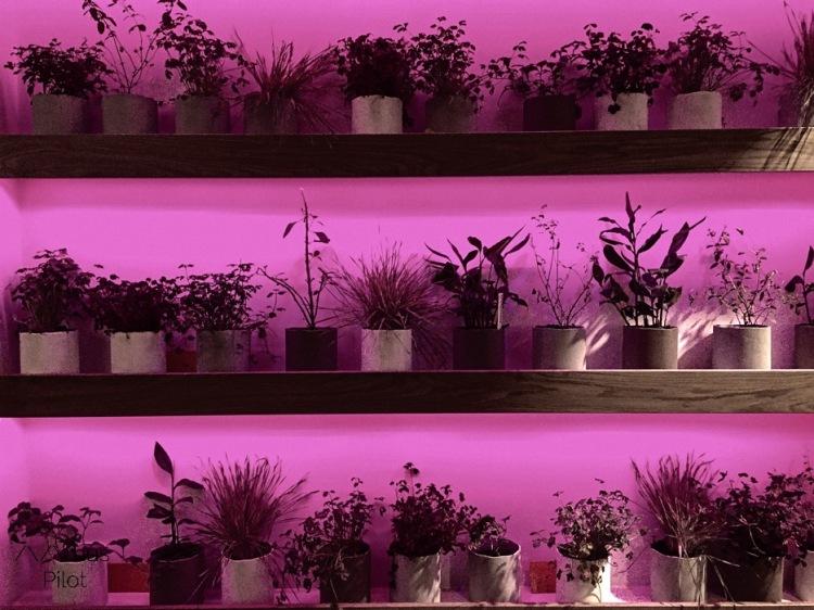 Herbs at ARoS FOOD HALL © AArhusPilot.com   Kirsten K. Kester