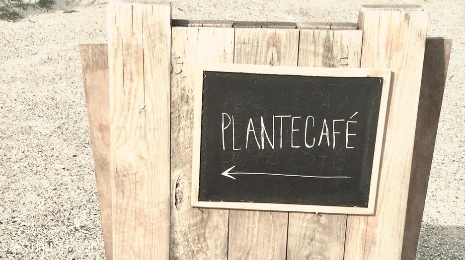 Plantecaféen © AArhusPilot.com | Kirsten K. Kester