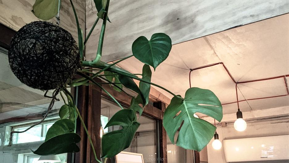 Kokedame plant at Plantecafén © AArhusPilot.com | Kirsten K. Kester
